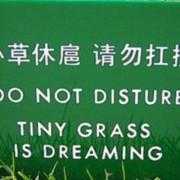 tiny-grass