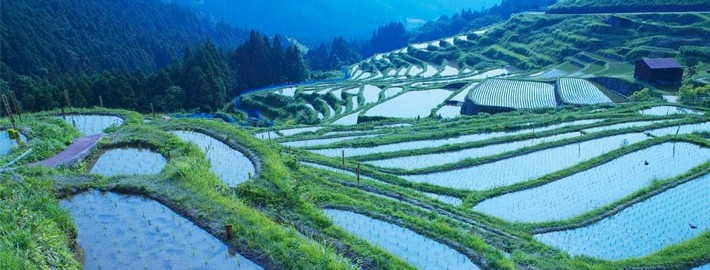 Japanese-Agriculture