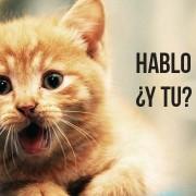 Cute cat speaking Spanish