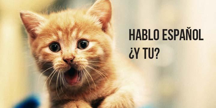 Can Cats Speak
