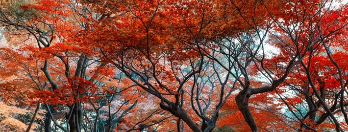 Autumn colours of Shinjuku