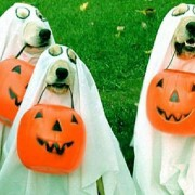 Dogs need sweets too