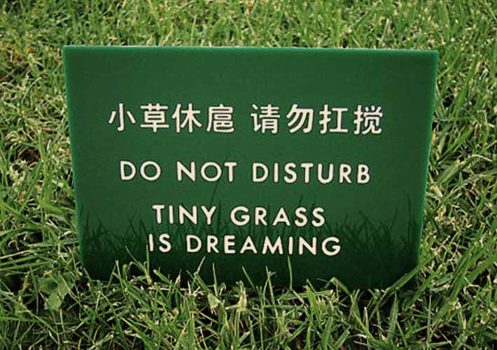 tiny-grass-is-dreaming