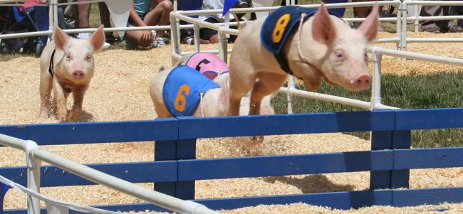 Pig Festival