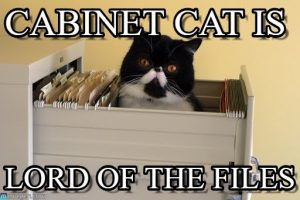 cat_in_file_cabinet_meme-www.memegen.com