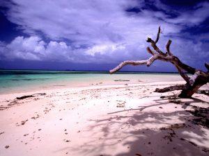 laura_beach_n_tree_170671778