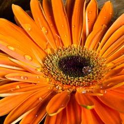 the colour orange